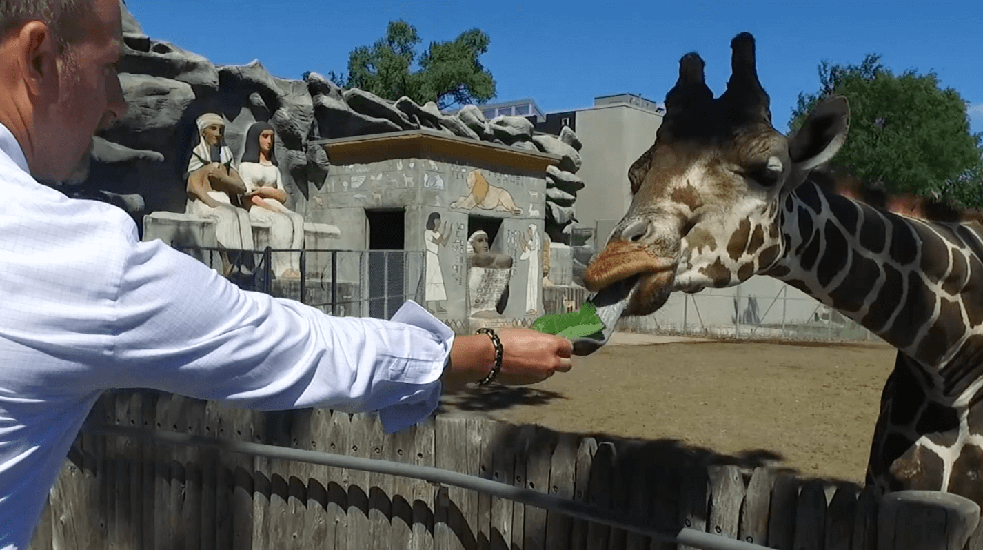 Paul Whiting with Detroit Zoo's Giraffes