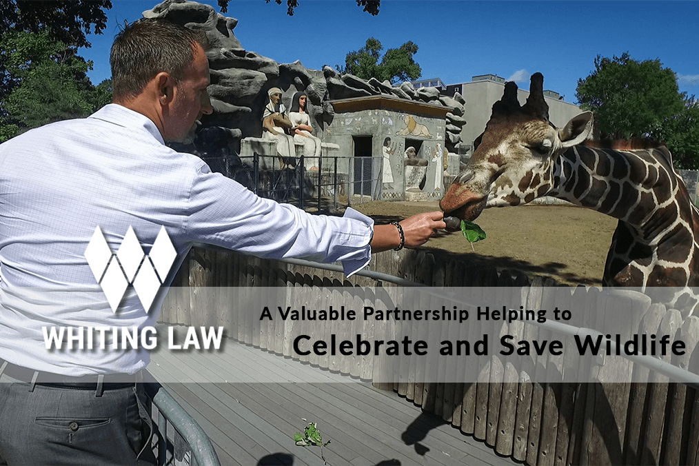 A Valuable Partnership Helping to Celebrate and Save Wildlife